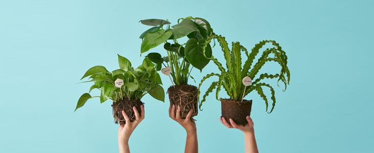 Purchase Indoor Plants