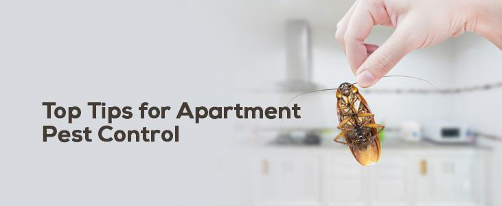 Apartment Pest Control