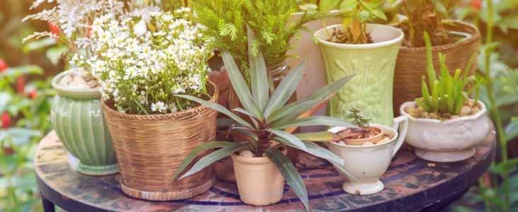 kitchen-garden-pots-in-kerala