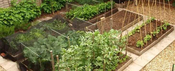 setting-kitchen-garden-in-kerala