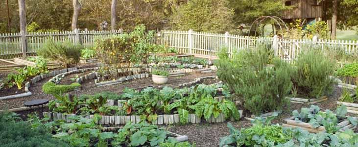 -good-kitchen-garden-in-kerala