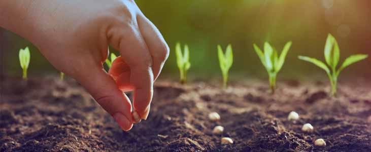kitchen-garden-seeds-in-kerala