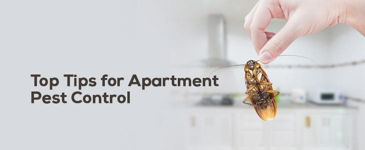 Top Tips for Apartment Pest Control – How to Do Pest Control at Home?