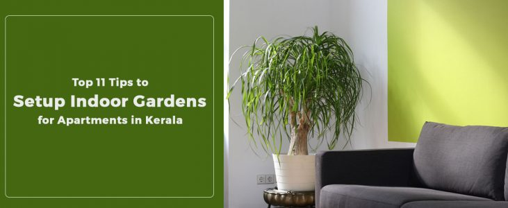 11 Top Tips To Setup Indoor Gardens For Apartments In Kerala