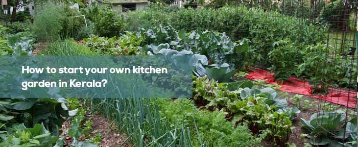How to Start Your Own Kitchen Garden in Kerala?